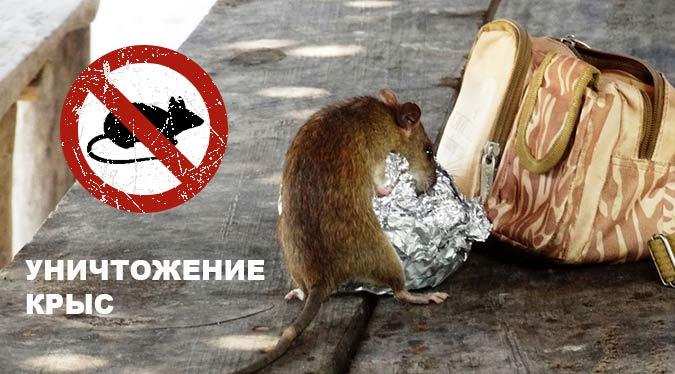 уничтожение грызунов в Коломне