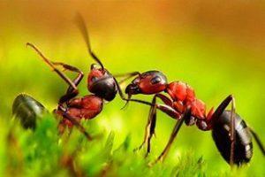 как мы уничтожаем муравьев
