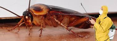уничтожение тараканов в Коломне