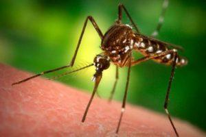 уничтожение комаров в Коломне