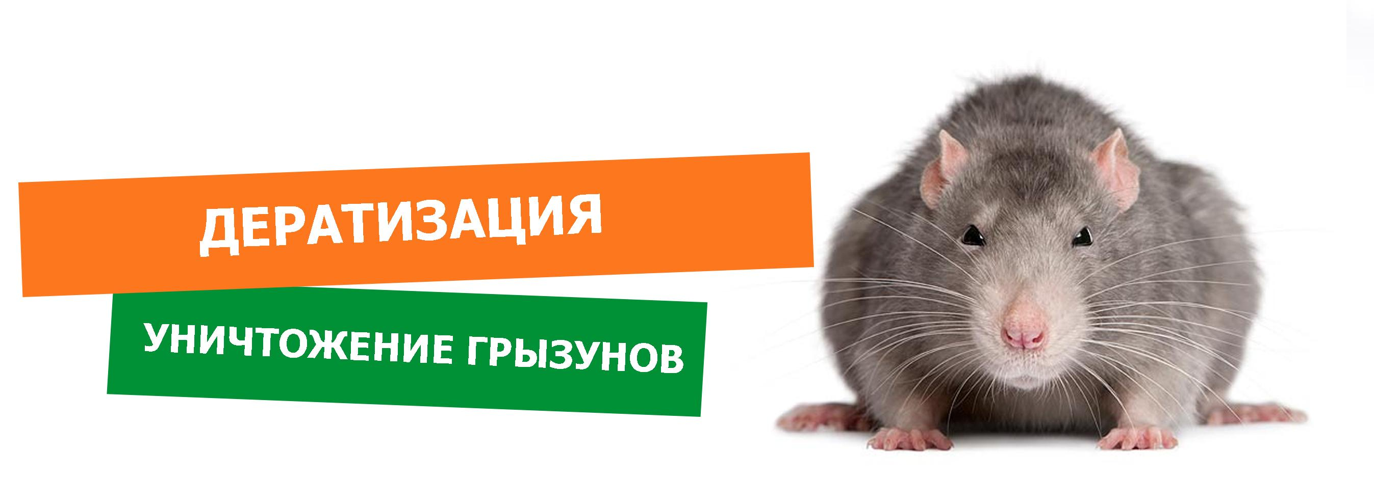дератизации от крыс