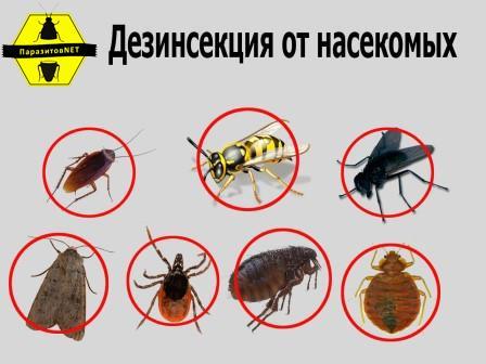 дезинфекция насекомых