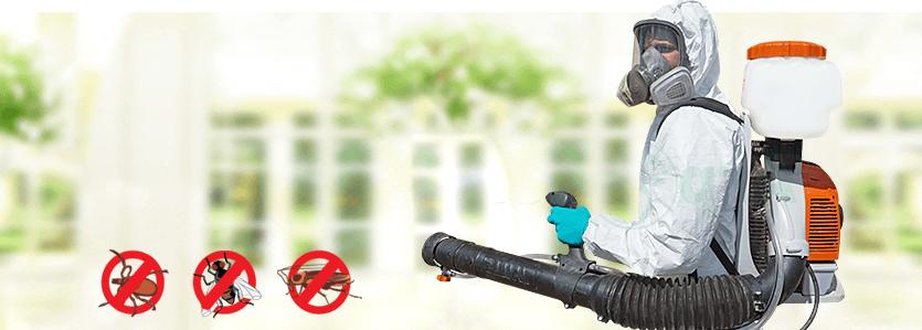 борьба с насекомыми в Коломне