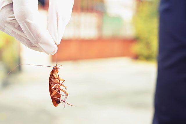 методы выведения тараканов