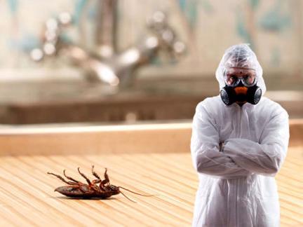 процесс борьбы с тараканами