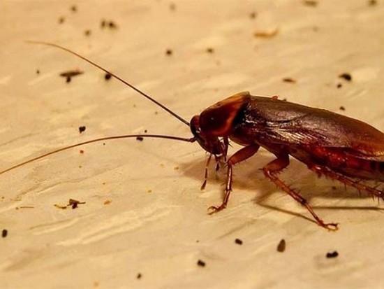 происхождение тараканов