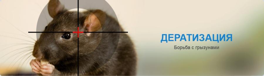 дератизация борьба с грызунами