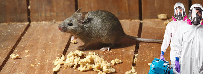 ловля крыс