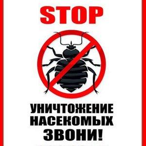уничтожение насекомых в доме